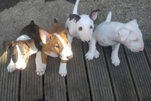 puppy-img8