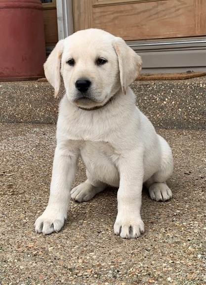 puppy-img9